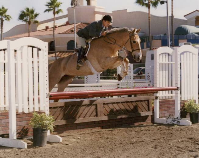 Frank Nin Prepares His Horse Star For A Workout At The Coto Valley Erian Center On